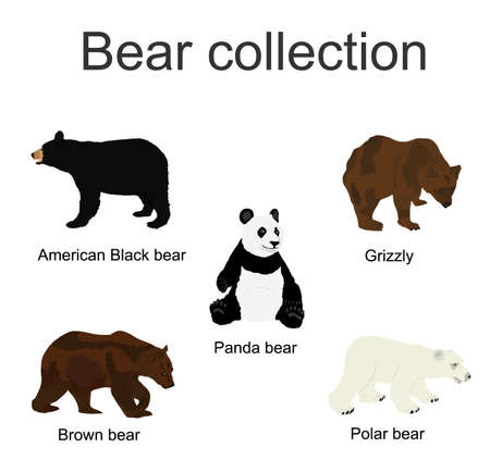 Bear species collection vector  illustration isolated on white background. Black bear, Grizzly, Polar bear, Panda, Brown bear symbol.