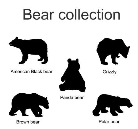 Bear species collection vector silhouette illustration isolated on white background. Black bear, Grizzly, Polar bear, Panda, Brown bear symbol.
