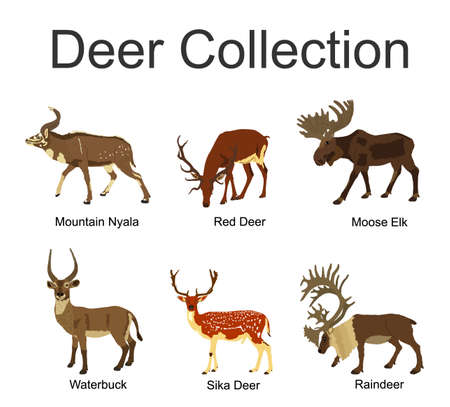Deer collection vector illustration isolated on white background. Mountain nyala antelope. Moose elk. Reindeer buck. Red deer grassing. Waterbuck african deer. Sika symbol.
