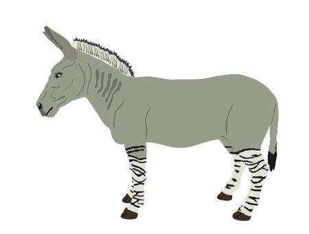 Zonkey vector illustration isolated on white background. Zebra  Donkey symbol. Zorse or zebrula or zonkie. Иллюстрация