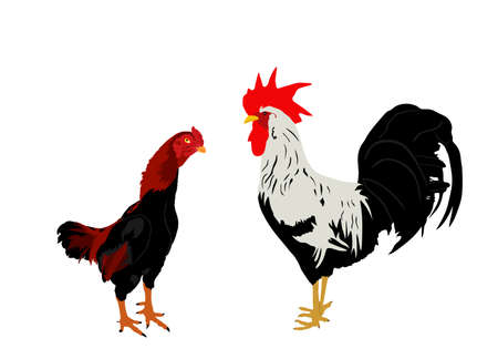 Elegant Rooster and chicken vector illustration isolated on white background. Male chicken and hen, organic food. Farm chantry cock.  Organic food symbol. Poultry bird family. Иллюстрация