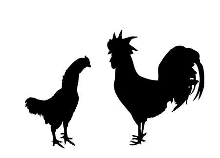 Elegant Rooster and chicken vector silhouette illustration isolated on white background. Male chicken and hen, organic food. Farm chantry cock.  Organic food symbol. Poultry bird family.