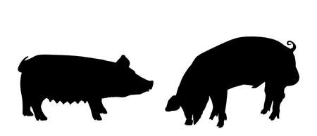 Boar and sow, male and female pig vector silhouette isolated on white background. Pork meat. Butcher shop wallpaper, poster. Spawn farm animal symbol. Domestic swine. Breeding boar. Organic food. Иллюстрация