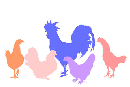 Elegant Rooster and chickens vector silhouette illustration isolated on white background. Male chicken and hen. Farm chantry cock.  Organic food symbol. Poultry bird family. Иллюстрация