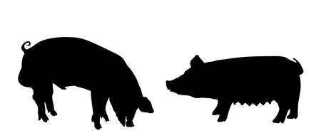 Boar and sow, male and female pig vector silhouette isolated on white background. Pork meat. Butcher shop wallpaper, poster. Spawn farm animal symbol.