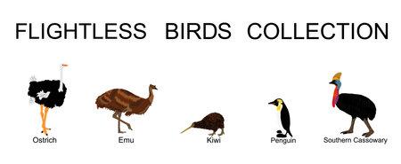 Flightless birds collection vector illustration isolated on white background. Ostrich, emu, kiwi, penguin and cassowary. Unusual endemic bird group. Wildlife exotic animal. Иллюстрация