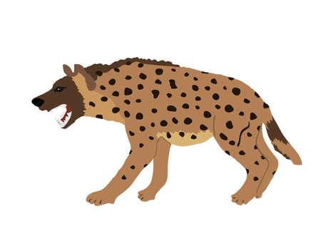 Hyena vector illustration isolated on white background. Wild animal from Africa. Scary predator. Safari wildlife member. Иллюстрация