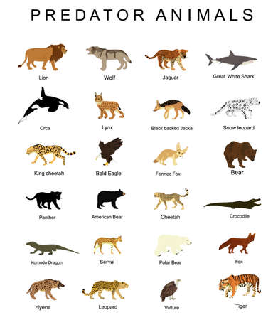 Predator animals set vector illustration isolated on white background. Wildlife carnivore collection. Most danger creature on the planet. Big cat group. Strong and fast hungry hunters set.