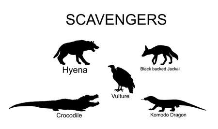 Scavengers animals vector silhouette illustration isolated on white background. Wildlife predators. Hyena, jackal, crocodile, vulture and komodo dragon lizard. Иллюстрация
