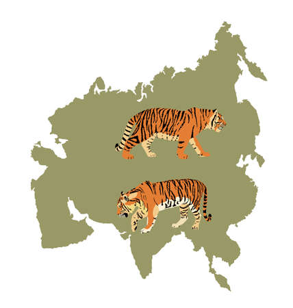 Tiger vector illustration isolated on Asia map continent silhouette on white background. Big wild cat. Siberian tiger (Amur tiger - Panthera tigris altaica) or Bengal tiger.