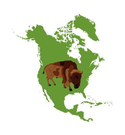 Bison vector illustration isolated on Northern America map silhouette on white background. Portrait of Buffalo male grassing on green land, symbol of America. Strong animal, Indian culture.