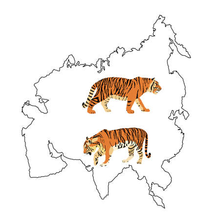 Tiger vector illustration isolated on Asia map continent contour on white background. Big wild cat. Siberian tiger (Amur tiger - Panthera tigris altaica) or Bengal tiger. Иллюстрация