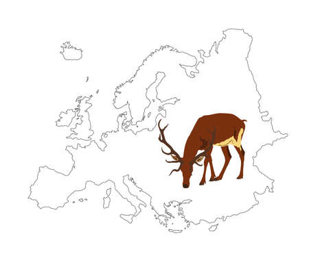 Deer vector illustration on Europe map silhouette isolated on white background. Reindeer powerful buck with huge antlers. Red deer grazing grass on European territory.