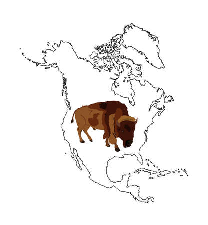 Bison vector illustration isolated on Northern America map silhouette contour on white background. Portrait of Buffalo male, symbol of America. Strong animal, Indian culture. Иллюстрация