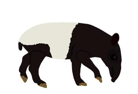 Malayan tapir vector illustration isolated on white background. Tapirus Indicus animal. Endemic Asian animal, like a pig.