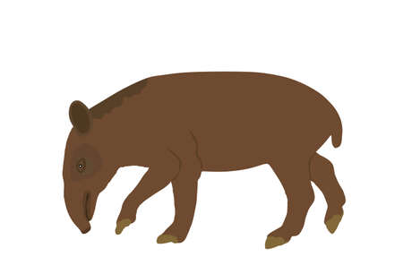 Tapir vector illustration isolated on white background. Tapirus Central and South America animal. Asian animal, like a pig. Çizim