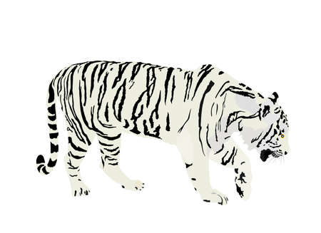 Siberian tiger vector illustration isolated on white background. Big wild cat. Amur tiger. Panthera tigris altaica. Tatoo sign. Zoo attraction.