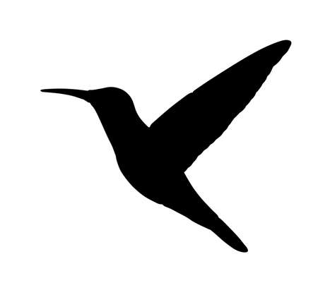 Hummingbird vector silhouette illustration isolated on white background. Tropical little bird colibri symbol.