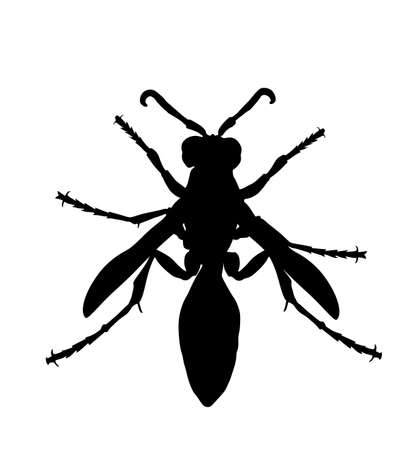 Wasp vector silhouette illustration isolated on white background. Honey bee vector silhouette symbol. Insect shadow. Hornet silhouette. Poison animal deadly insect with sting.