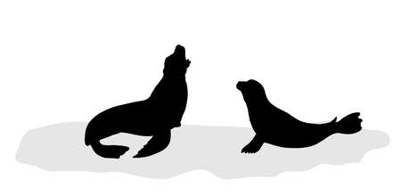 Seal couple on iceberg silhouette. Sea lion on block of ice vector silhouette illustration isolated on white background. Polar animals family in cold winter environment.