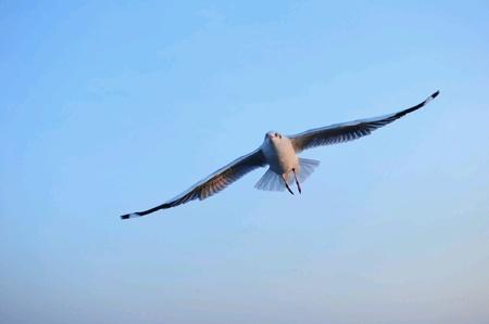 the seagulls: Seagulls. Stock Photo