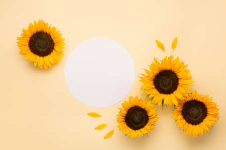 Beautiful fresh sunflowers with leaves on yellow background. Flat lay, top view. Thanksgiving day, Halloween Holiday concept with copy space. Harvest time, agriculture. Sunflower natural background. Stockfoto