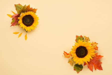 Beautiful fresh sunflowers with leaves on yellow background. Flat lay, top view. Autumn, Thanksgiving day, Halloween Holiday concept. Harvest time, agriculture. Decorative floral corners.