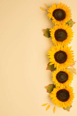 Beautiful fresh sunflowers with leaves on yellow background. Flat lay, top view. Thanksgiving day, Halloween Holiday concept with copy space. Harvest time, agriculture. Sunflower natural background
