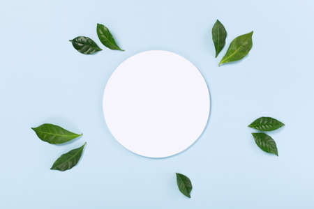 Fresh green leaves and white empty blank on pastel blue background. Modern skin care concept. Zero waste. Flat lay composition. Beauty blog layout. Top view, copy space