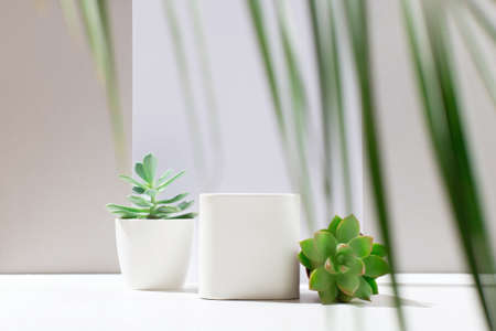 White empty box on light backdrop, cactus and succulent plants with shadow. Shop-window for cosmetic products. Display sample. Place Mockup style. Cosmetology and beauty concept Zdjęcie Seryjne