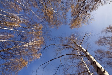 Sight from the bottom of autumn forest photo