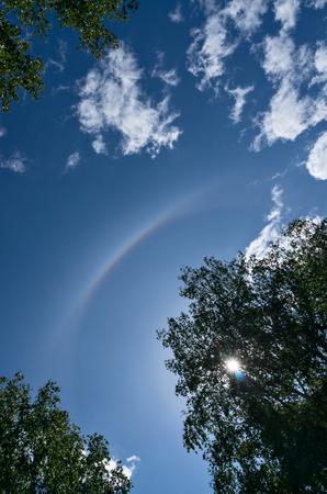 aureole: Solar halo in blue sky among trees