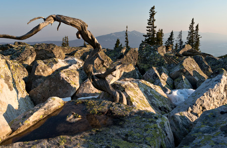 urals: Stones and trees in mountains, South Urals