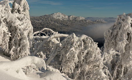frozen trees: Lanscape with frozen trees and mountain