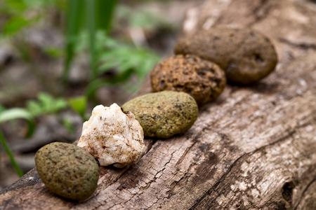 disharmony: Abstract disharmony in row of pebbles Stock Photo