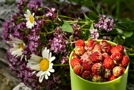 Cup full of wild strawberries and and herbal bouquet
