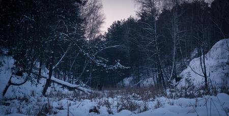 winter birch forest Zdjęcie Seryjne