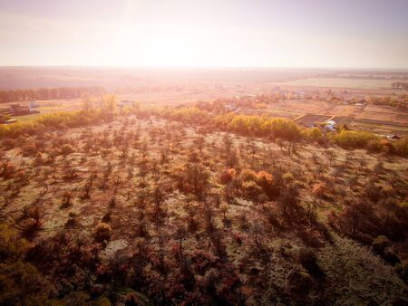 burnt plot of forest. ecology. aerial view.