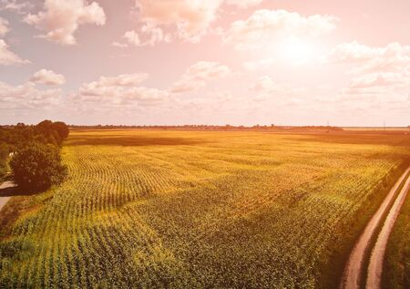 harvest field before sunset. Summer. aerial view 版權商用圖片