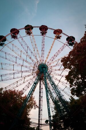Ferris wheel in the forest.