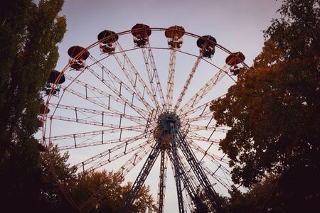Ferris wheel in the forest.