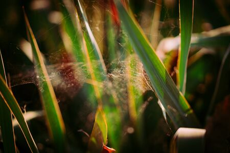 spider on a web in the thicket. macro