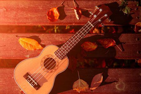 vintage ukulele on a bench in a park. autumn. sunny