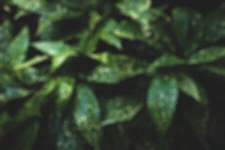 garden of green plants. background. blurred 写真素材