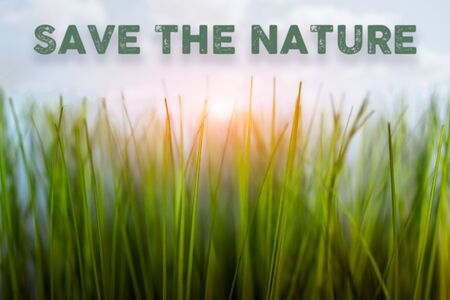 green grass. macro plan. call for conservation. with table of contents. blurred background
