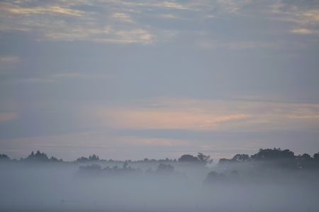 treetops: treetops above fog at dawn under cloudy sky Stock Photo