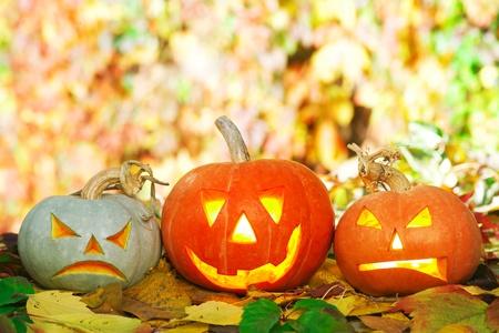 Halloween pompoenen liggend op de herfst bladeren Stockfoto