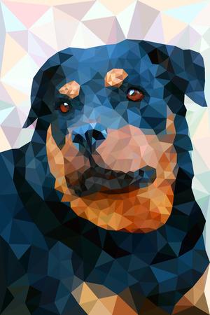 pedigree: Portrait of pedigree dog