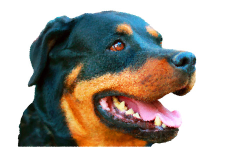 pedigree: Portrait of pedigree dog