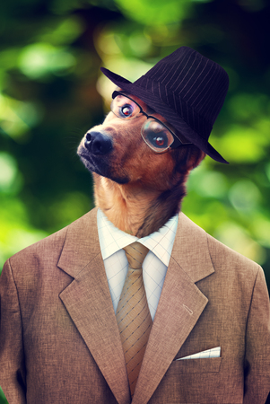 Dog in a hat, suit and glasses. Photomanipulation